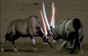 Fight! Photo from http://www.animalswithlightsabers.com/post/187878919