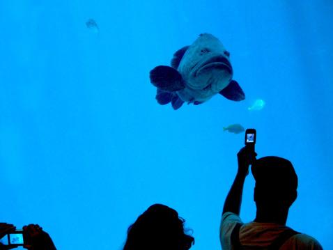photo-sharing-fish
