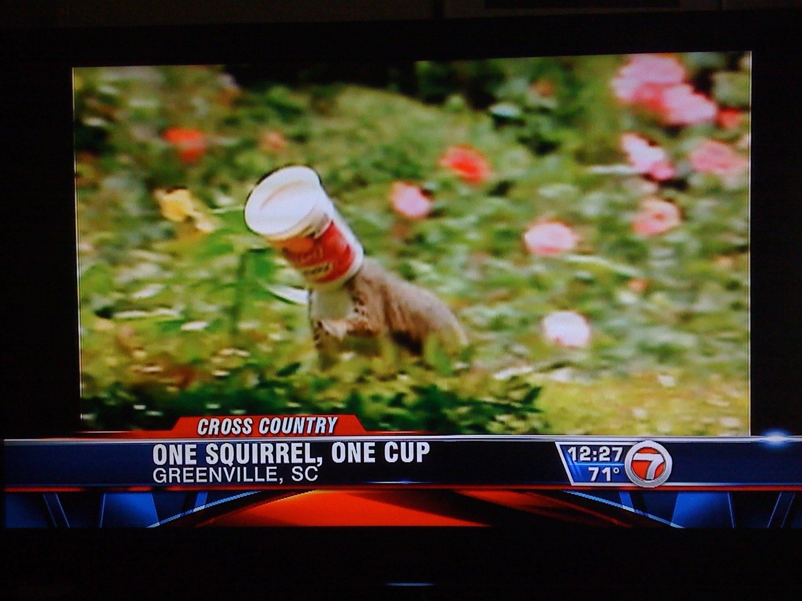 One squirrel, One cup