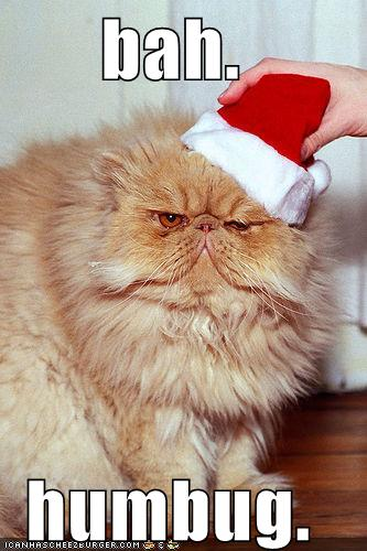 funny pictures bah humbug cat Bah. Humbug. 10 Ways to Escape the Family this Holiday Season