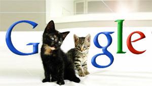 Google Kittehs