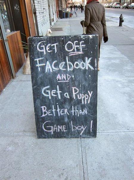 get_a_puppy