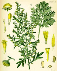 wormwood 241x300 Image search engine GazoPa is Blooming!