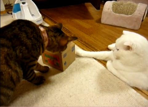 Cat 1: Whoa! Cat 2: Meh..