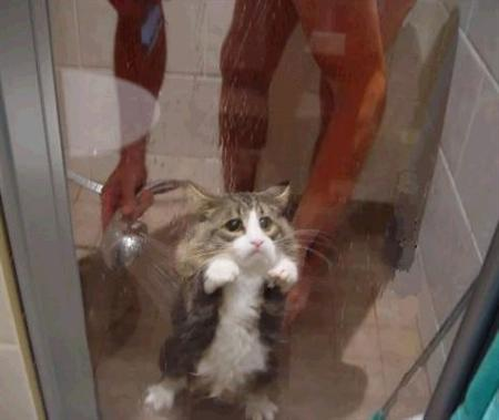 """""""Got an idea just now: get me the hell out of his shower!"""""""