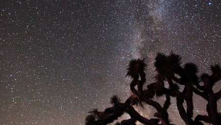 Mesmerizing… Joshua tree under the milky way. [video]