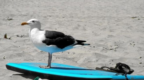 Have you heard about the TwitWebSurf for iPad bird?