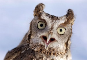 eastern owl 300x206 Hootsuite announces Hootsuite Freemium for regular and power owls.
