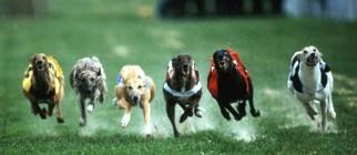 GreyhoundRace
