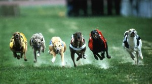 Dogs Racing for the prize