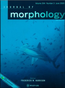 morphology cover 260x352 Kindle Singles is a play for the college market