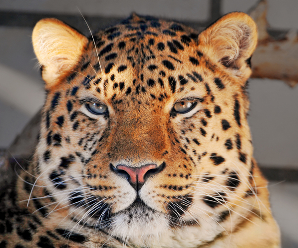 Apple Finally Patches Critical Security Hole in OS X Leopard