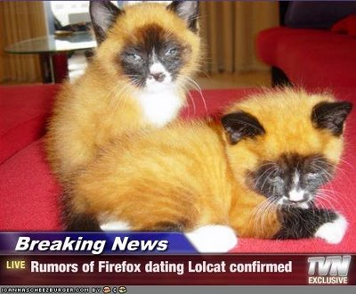 firefox lolcat 1 Breaking News: Rumors of Firefox dating Lolcat confirmed