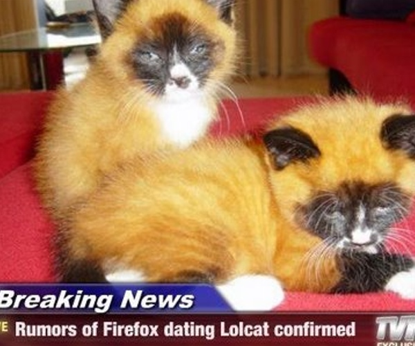 Breaking News: Rumors of Firefox dating Lolcat confirmed