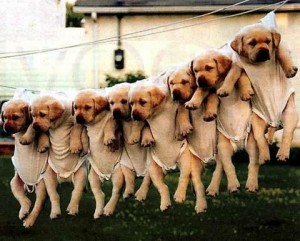 hanging puppies 300x241 10 Start Ups Youve Definitely Never Heard Of