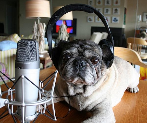 Podcasting Microphone Showdown: 3 Blue Mics Compared
