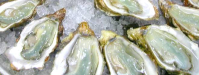 "Love oysters? Check out Oysterpedia, an ""app-hrodisiac"""