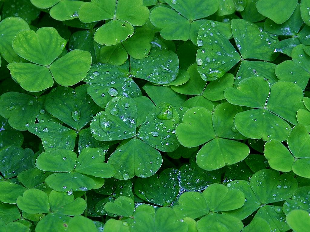 10 free iPhone apps for a Happy St. Patrick's Day