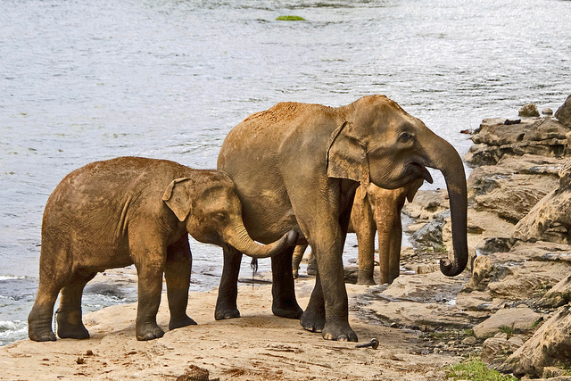 Namecheap raises $20k for Save the Elephants following GoDaddy CEO's hunt video