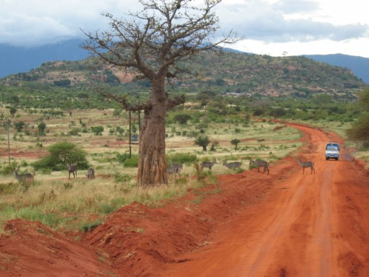 african safari route 520x390 Mobile technologies take hold to shape the future of Africa