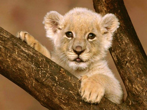 blissfully cute baby animals lion cub 12 Mobile technologies take hold to shape the future of Africa
