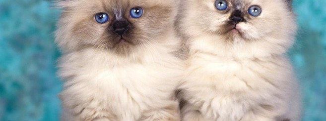 cats-wallpaper-1152x864
