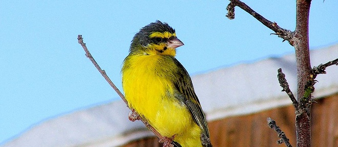 Very clever: Keep your email safe by leaving a Canary in your inbox