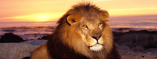 Quick Poll: It's been 24 hours. What are your first impressions of OS X Lion?
