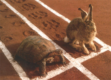 hare turtle Circles and social design: Why Google+ is worth your time