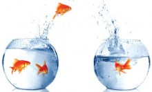 jumping fish one fishbowl better 220x133 How to optimize your conference for social media