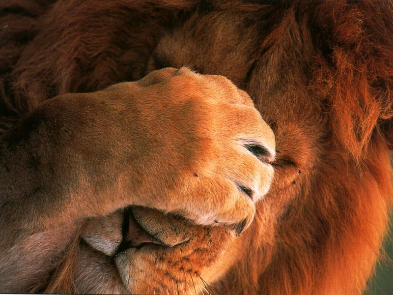 Handy tips and tricks for OS X Lion