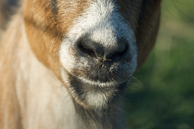 If Craigslist benefited charity, you would have the Social Good site KarmaGoat