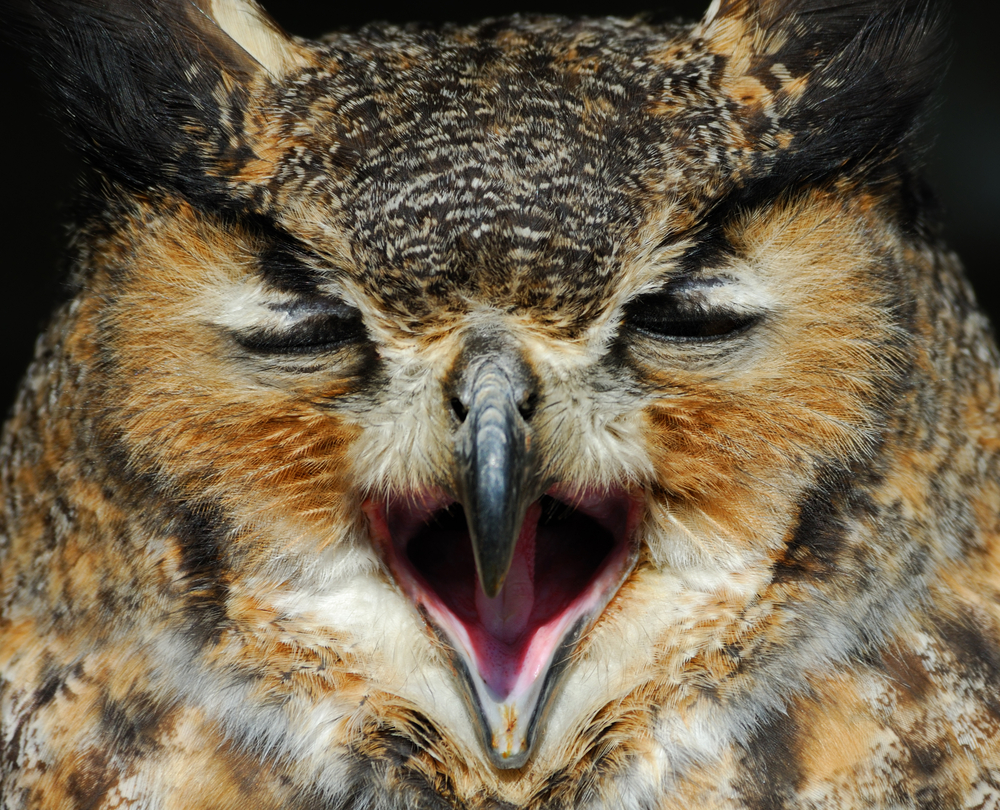 Tumblr Tuesday: Hungover Owls are the new Angry Birds