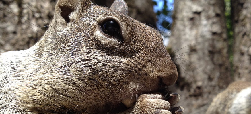 You need to see these high res photos taken with an iPhone 4S