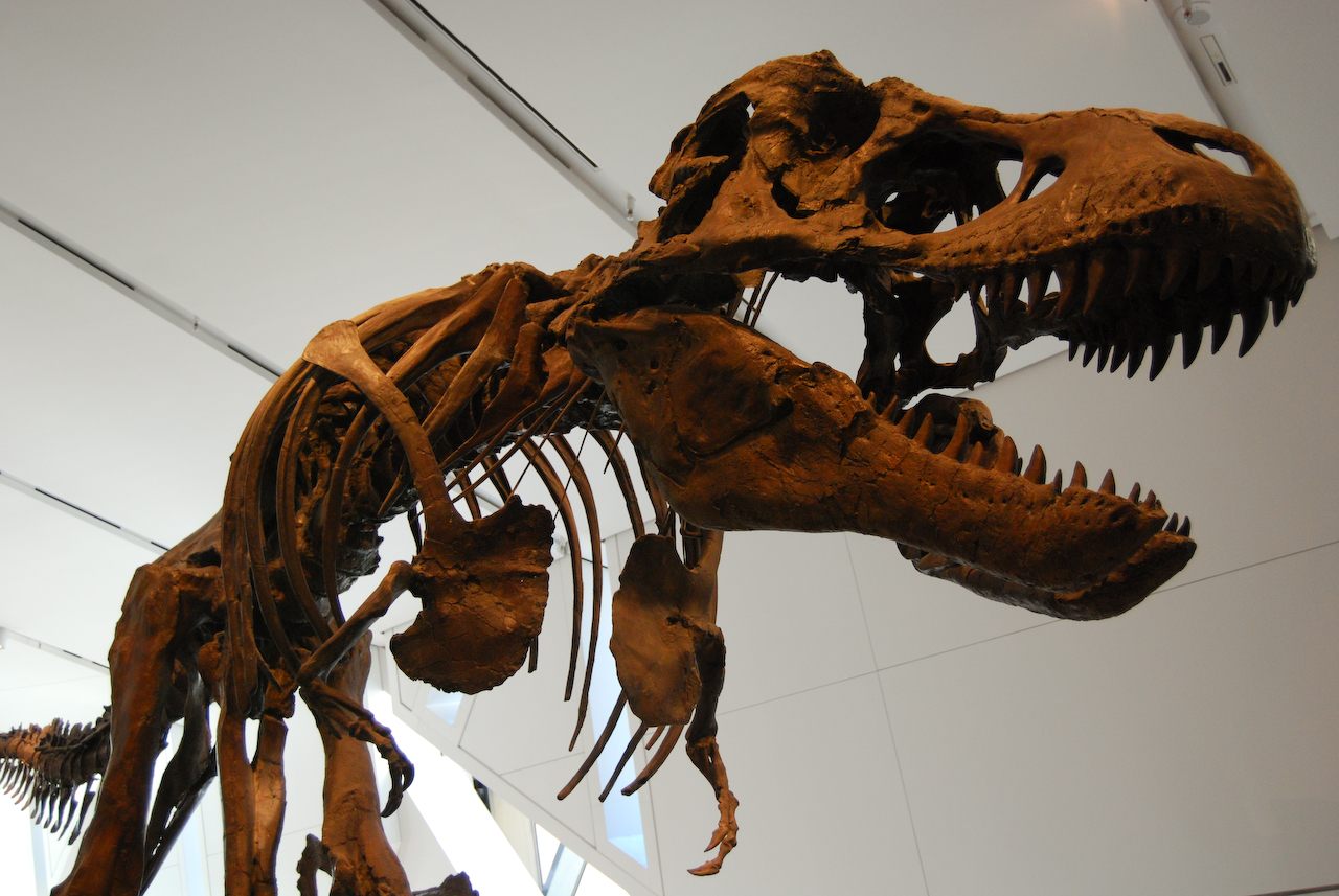 The T. Rex probably couldn't run, according to this AI-driven model