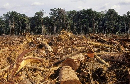 Deforestation Amazon 520x338 Giving Aint Easy (But it Should Be)
