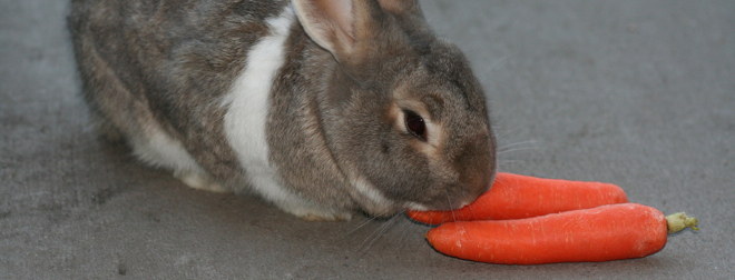 Here comes the future: Augmented reality contact lenses have been tested on rabbits
