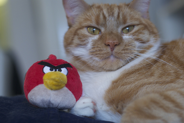 Rovio: Forget what we said yesterday, we ARE bringing Angry Birds Space to Windows Phone