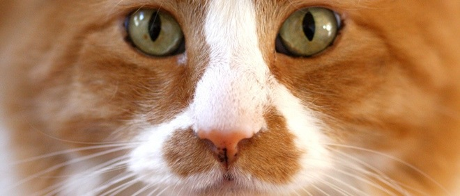 Hate CAPTCHAs? Catcha turns website security into a game of 'spot the cat'