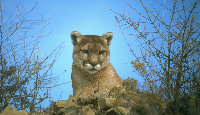 TNW Review: OS X 10.8 Mountain Lion