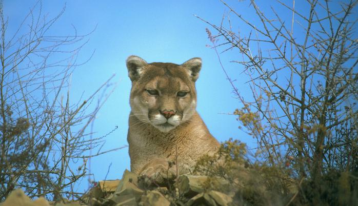 TNW Review: OS X 10.8 Mountain Lion