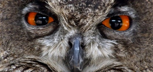 HootSuite rolls out single sign-on feature, letting users log-in with company email