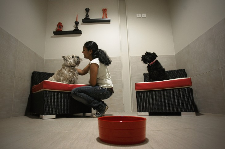 Airbnb for dogs Rover.com raises $7m led by The Foundry Group, rolls out Animoto-powered video service ...
