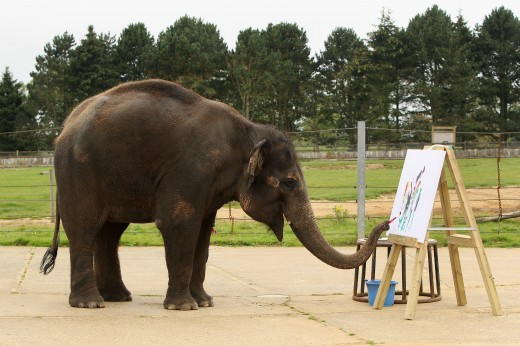 Zoo Unveils Its Painting Elelphant