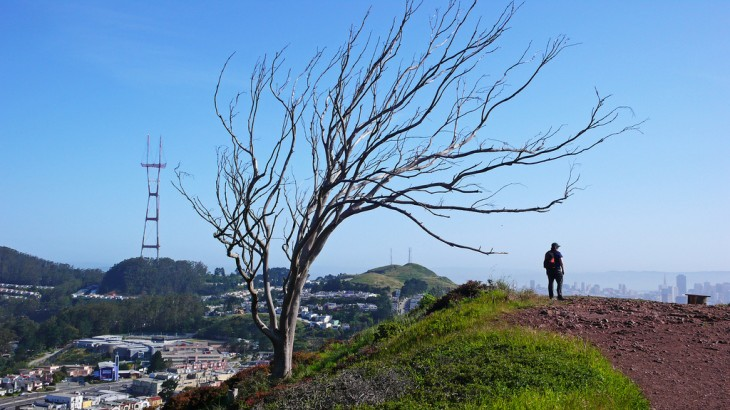 Following the loss of #thatsftree, San Francisco Instagrammers pay their respects in photos