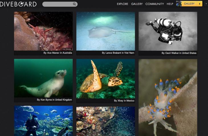 Diveboard - Gallery