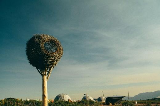 nest by hannes wingate