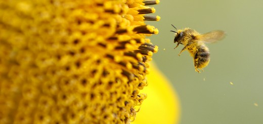 GERMANY-WEATHER-ANIMALS-BEE-FEATURE