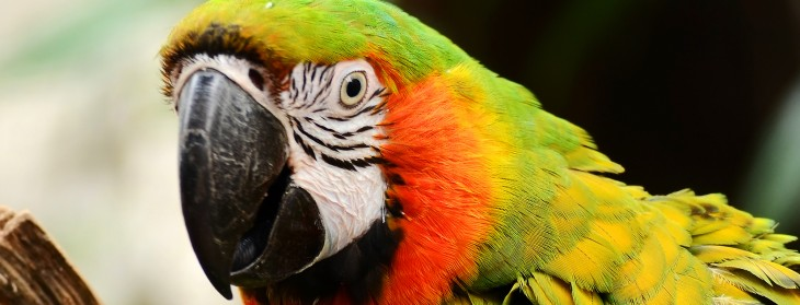 Macaw, the Web design tool for programmers, hits Kickstarter. Here's an overview of why it's ...