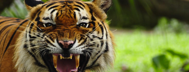 Social Marketing Startup Tiger Pistol Launches New Platform